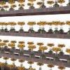 每单体设备可供奉莲花灯可单体独立摆放四川八吉祥